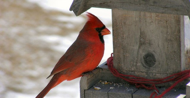 Réseau de mangeoires d'oiseaux à découvrir à la réserve du cap Tourmente