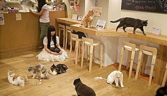 Clément Marty : Une première à Montréal avec le café « Chat l'heureux »