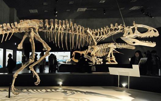 La découverte d'une nouvelle espèce de Tyrannosaure en Alaska