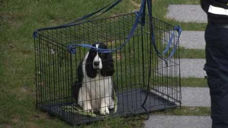 Urgences animales : Les premiers gestes de secours pour aider vos animaux de compagnie