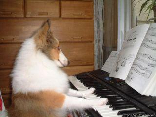 La musique adoucit les moeurs des chiens : Vrai ou Faux ?