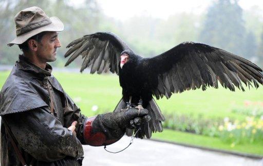 La police allemande et les vautours détectives