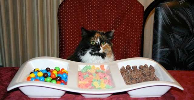 Les chats ne détectent pas le goût sucré
