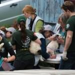 Plus de 200 chiens et chats ont été saisis dans une ferme en Estrie