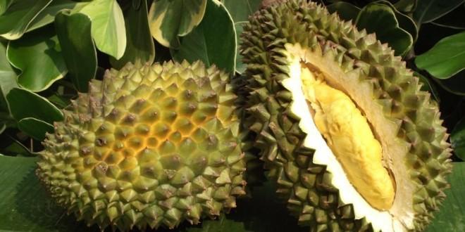 Le fruit qui pue le plus au monde est le Durian