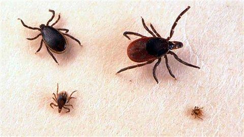 Maladie de Lyme – Montérégie : Un appel à la vigilance