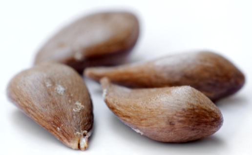 Le cyanure présent dans les pépins de pomme