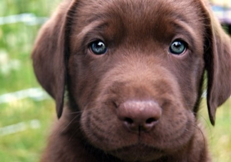 Les meilleures races de chiens à adopter par une famille