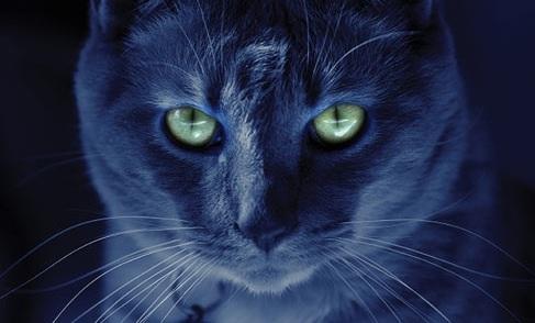 La nyctalopie : La capacité de voir dans le noir