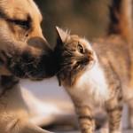 Des contraceptifs pour chiens et chats afin de contrôler les populations des animaux errants