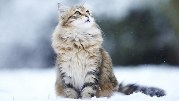 Pensez à protéger vos animaux pendant cette période de grand froid