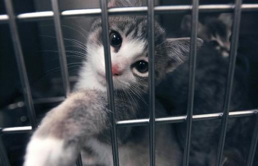 Quatre ménages sur dix laissent sortir leurs chats à l'extérieur