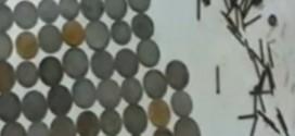 Inde : Un homme avale des centaines de clous et des pièces de monnaies