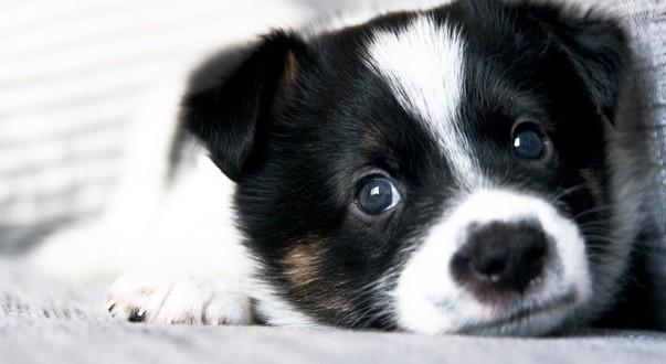 L'amour entre le chien et son maître passe par le regard