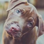 Québec : Un projet de loi pour le bien-être des animaux