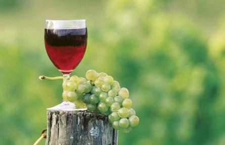 Le vin rouge aurait des vertus protectrices de l'audition