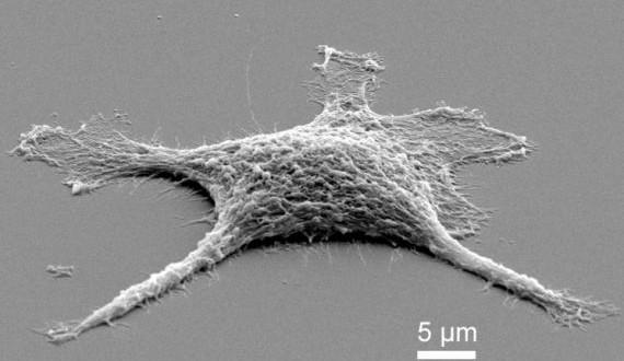 Des scientifiques arrivent à créer une cellule Zombie