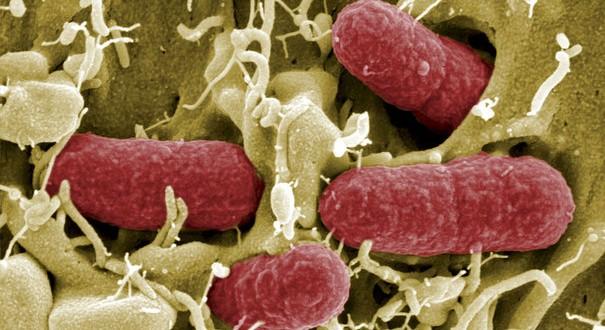 L'augmentation  de cas d'infection de la bactérie C chez les enfants préoccupe