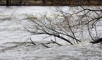 Inondations : Sauvetage de plus de 90 chiens après la montée des eaux de la rivière Cachée