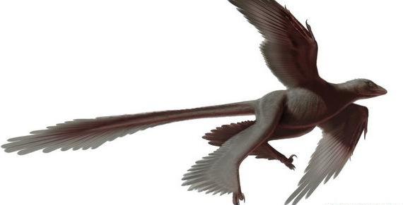 Changyuraptor Yangi : Le nouveau dinosaure à plumes