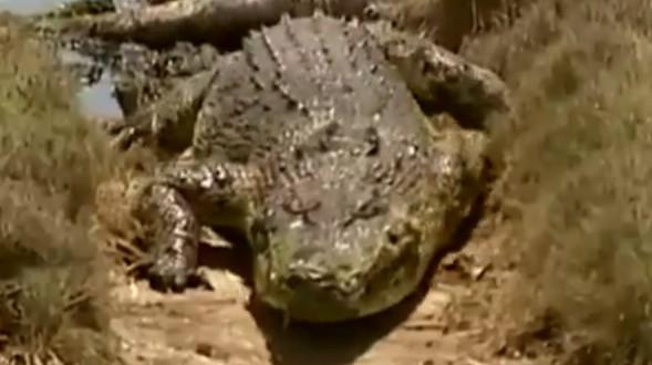 Australie : Une femme attaquée par un crocodile à Thornton Beach