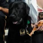 Kanak : Un chien au service de police de Sherbrooke