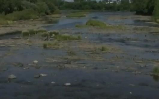 La Ville de Saint-Hyacinthe en cause dans la mort de milliers de poissons dans la rivière Yamaska