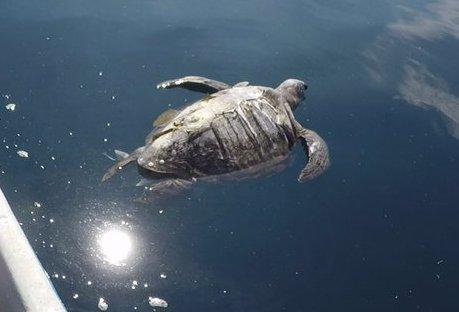 400 tortues mortes en Amérique centrale